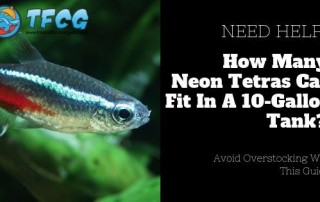 How Many Neon Tetras Can You Keep in a 10 Gallon Tank