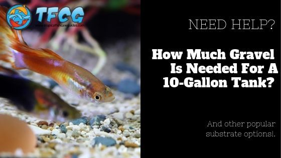 How Much Gravel For 10 Gallon Tank And Other Substrate Options You Can Use