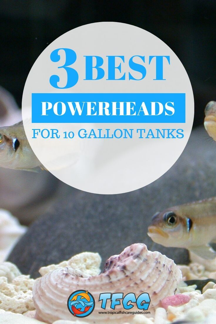 3 Best Powerheads For 10 Gallon Tanks