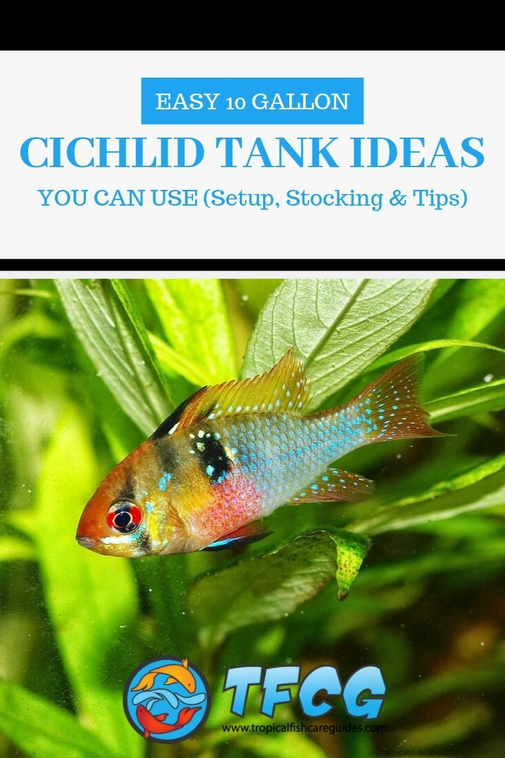 Easy 10 Gallon Cichlid Tank Ideas
