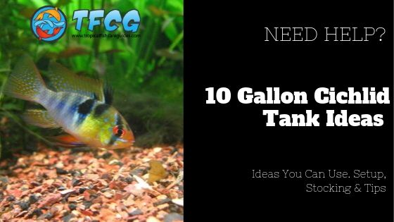 Easy 10-gallon Cichlid Tank Ideas You Can Use. Setup, Stocking & Tips