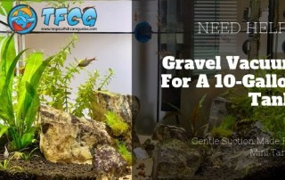 Gravel Vacuum For 10 Gallon Tanks Smaller TOP 3 Recommendations Gravel Vacuum For 10 Gallon Tank
