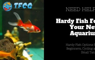 Hardy Fish For Your New Aquarium (Beginners, Cycling & Small Tanks)
