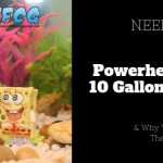 Powerheads For A 10-Gallon Tank & Why You Should Use Them