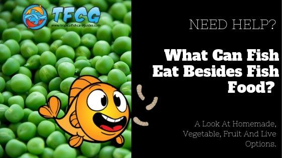 What Can Fish Eat Besides Fish Food A Look At Homemade, Vegetable, Fruit And Live Options.