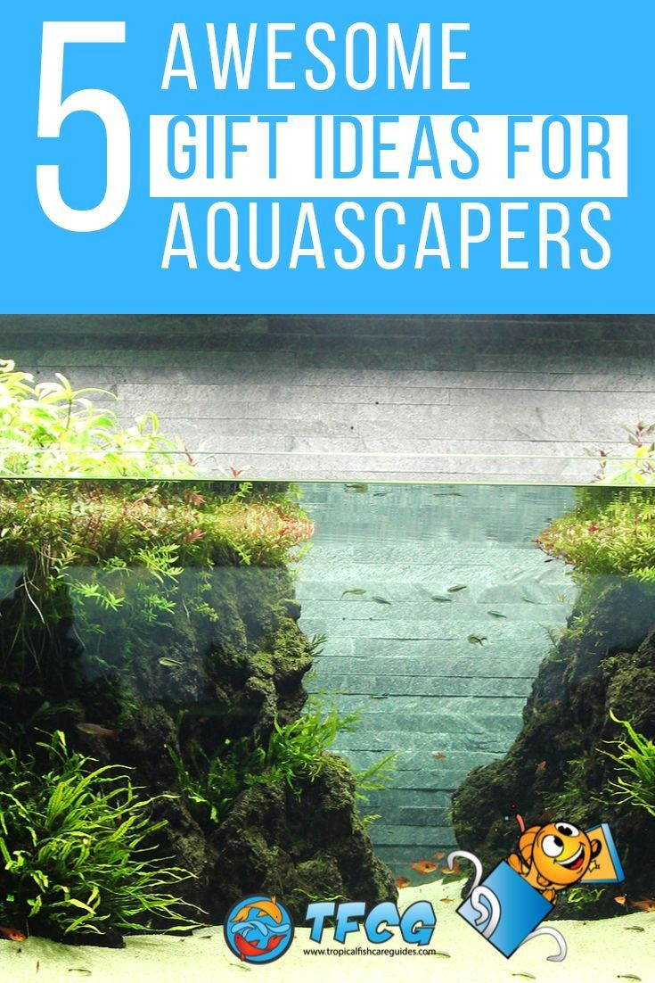 Awesome Gift Ideas For Aquascapers