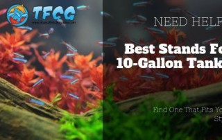 Best Stands For 10 Gallon Fish Tanks