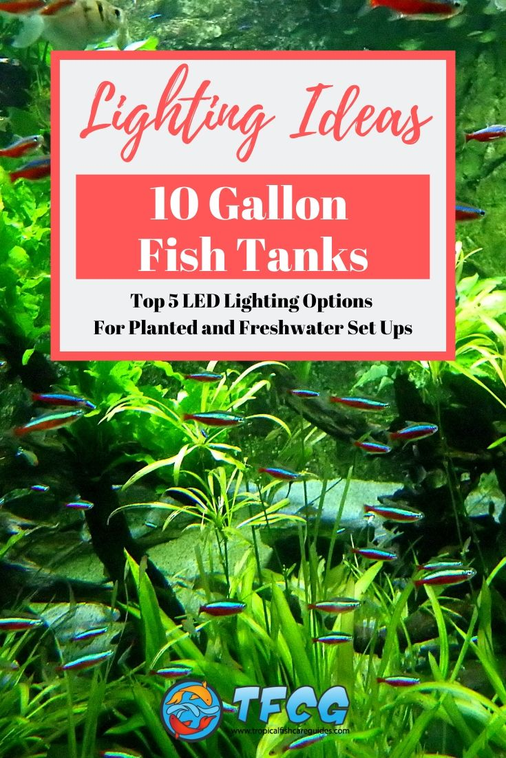 LED Lights For Your 10 Gallon Fish Tank