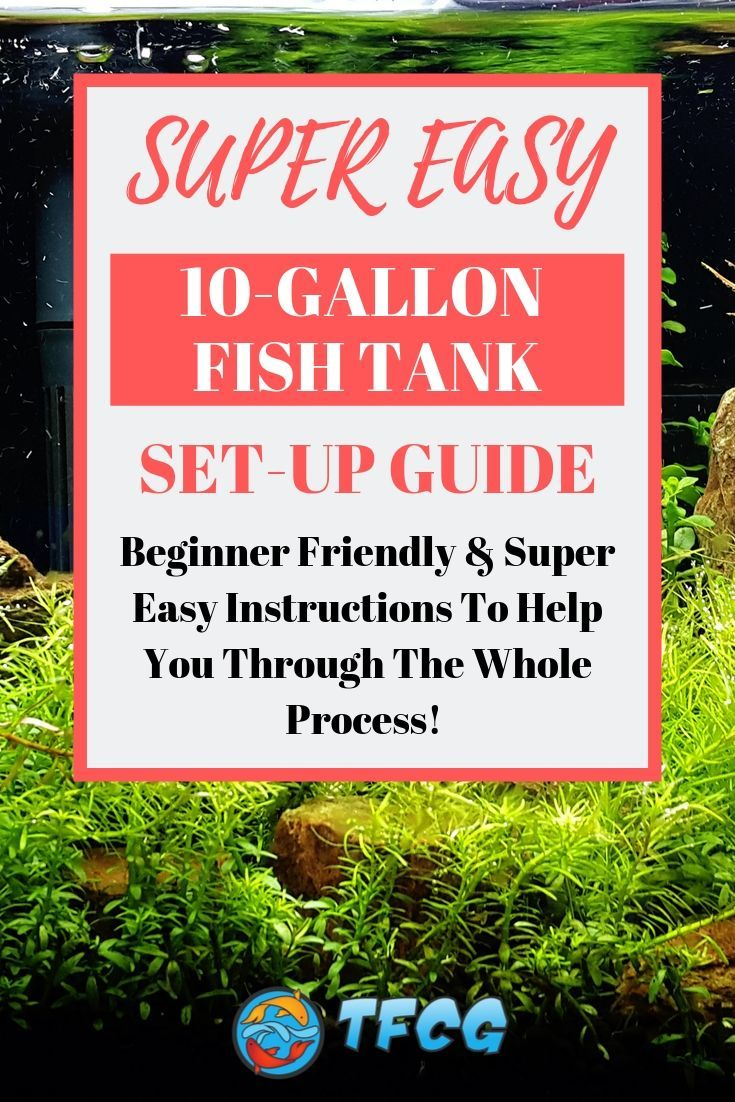 SUPER Easy 10-Gallon Fish Tank Set-Up Instructions For Beginners