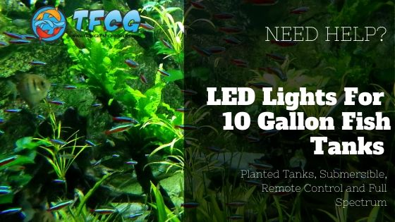 Top 5 LED Lights For Your 10 Gallon Fish Tank