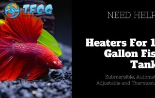 Best Heaters For A 10 Gallon Fish Tank