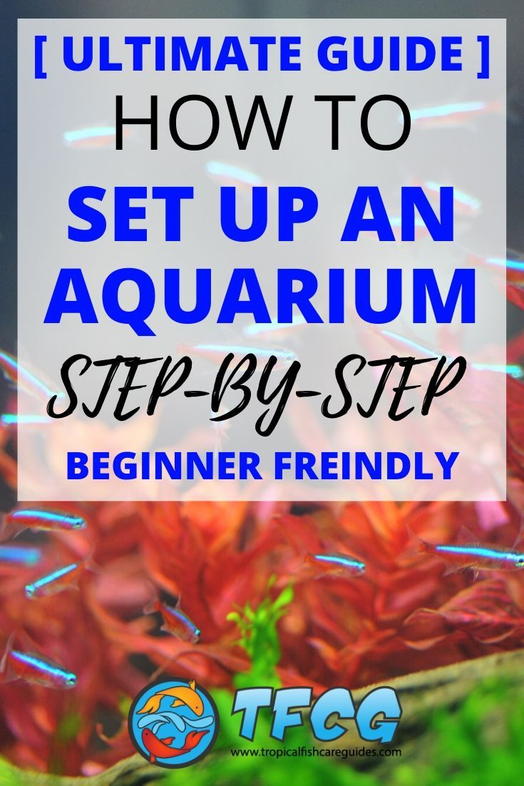 Best Freshwater Aquarium Setup - The Ultimate Step by Step Guide