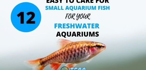 Easy To Care For Small Fish For Freshwater Aquariums