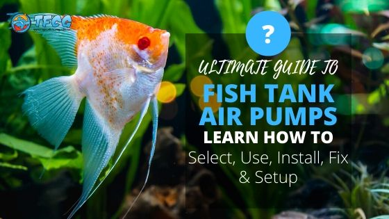 Fish Tank Air Pump Setup & Selection Guide