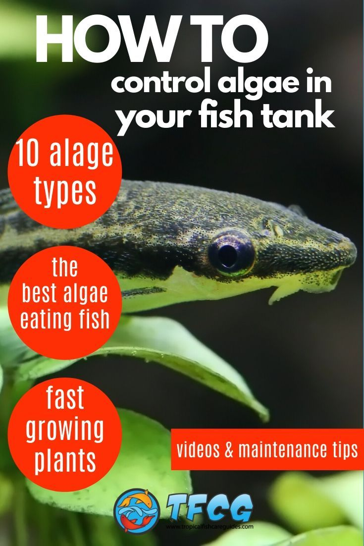 How to Control Algae In A Fish Tank 10 Types Of Aquarium Algae