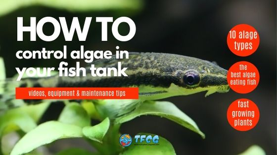 How to Prevent Algae In A Fish Tank Plants, Fish & Equipment