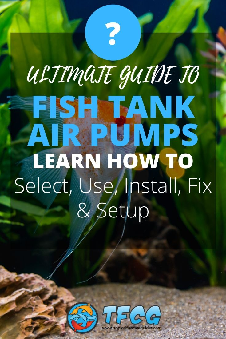 Ultimate Fish Tank Air Pump Setup & Selection Guide