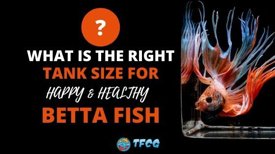 how big should a betta fish tank be_
