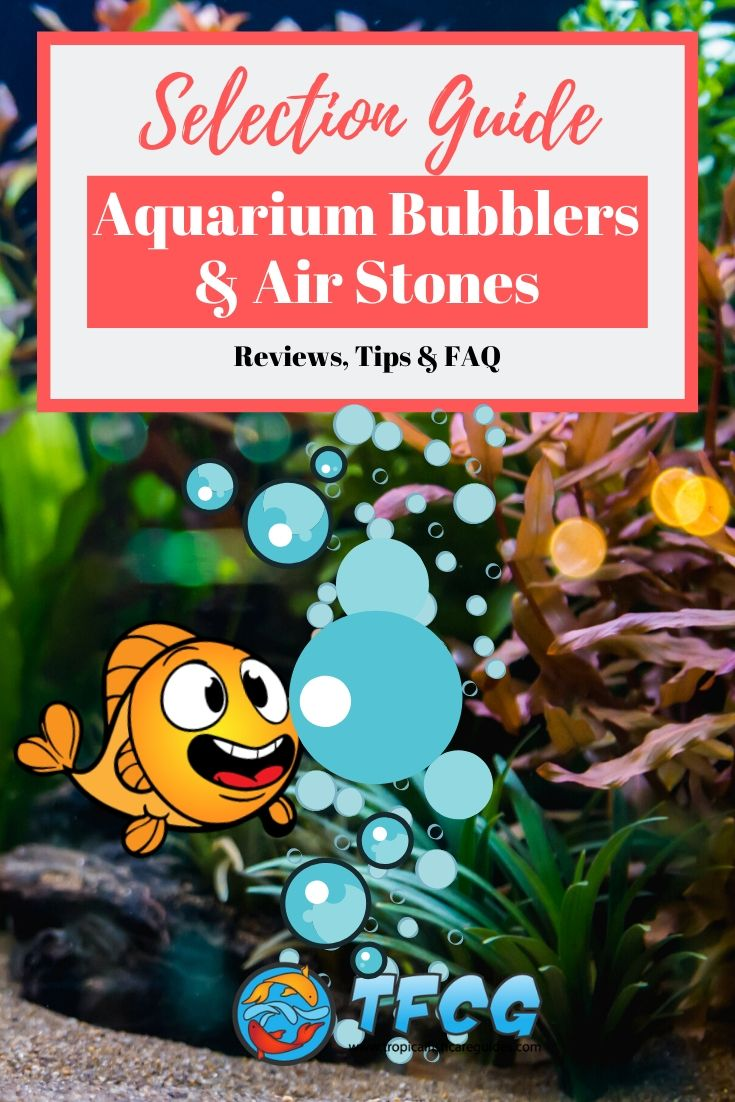 Best Aquarium Bubblers & Air Stones For Your Fish Tank