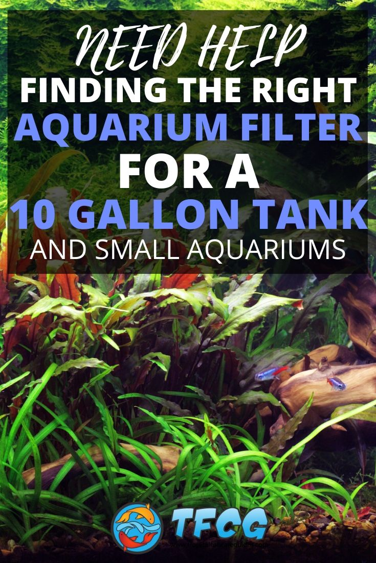 Best Filter For A 10 Gallon Tank & Small Aquariums