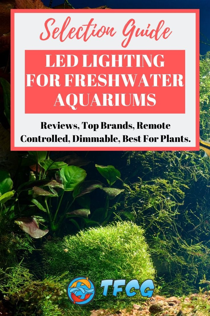 Best LED Aquarium Lighting Options For Freshwater Aquariums