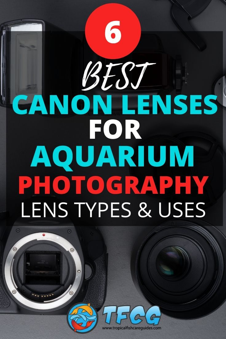 Canon Lens For Aquarium Photography