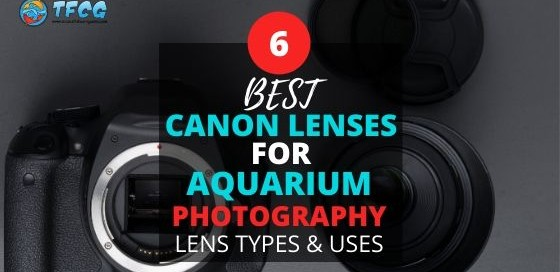 Canon Lens Types & Uses For Aquarium Photography