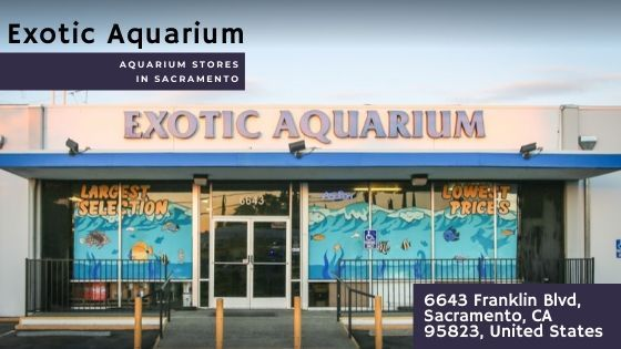Exotic Aquarium In Sacramento, California