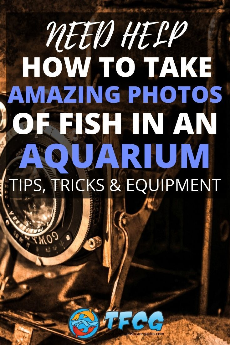 How To Take Photos Of Fish In An Aquarium