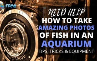 Learn To Take Photos Of Fish In An Aquarium Tip, Tricks & Equipment