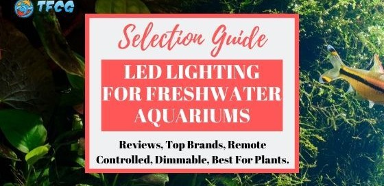 List Of The Best LED Lights For Freshwater Aquariums