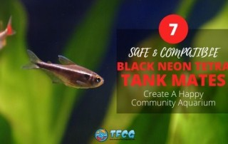 Fish Compatible With Black Neon Tetras – How to form a Happy Little Community With Black Neon Tetras