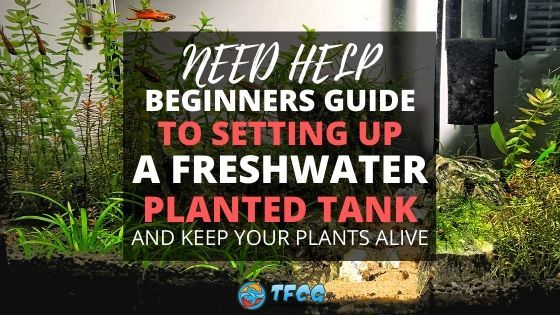 Guide To Aquarium plants care for beginners