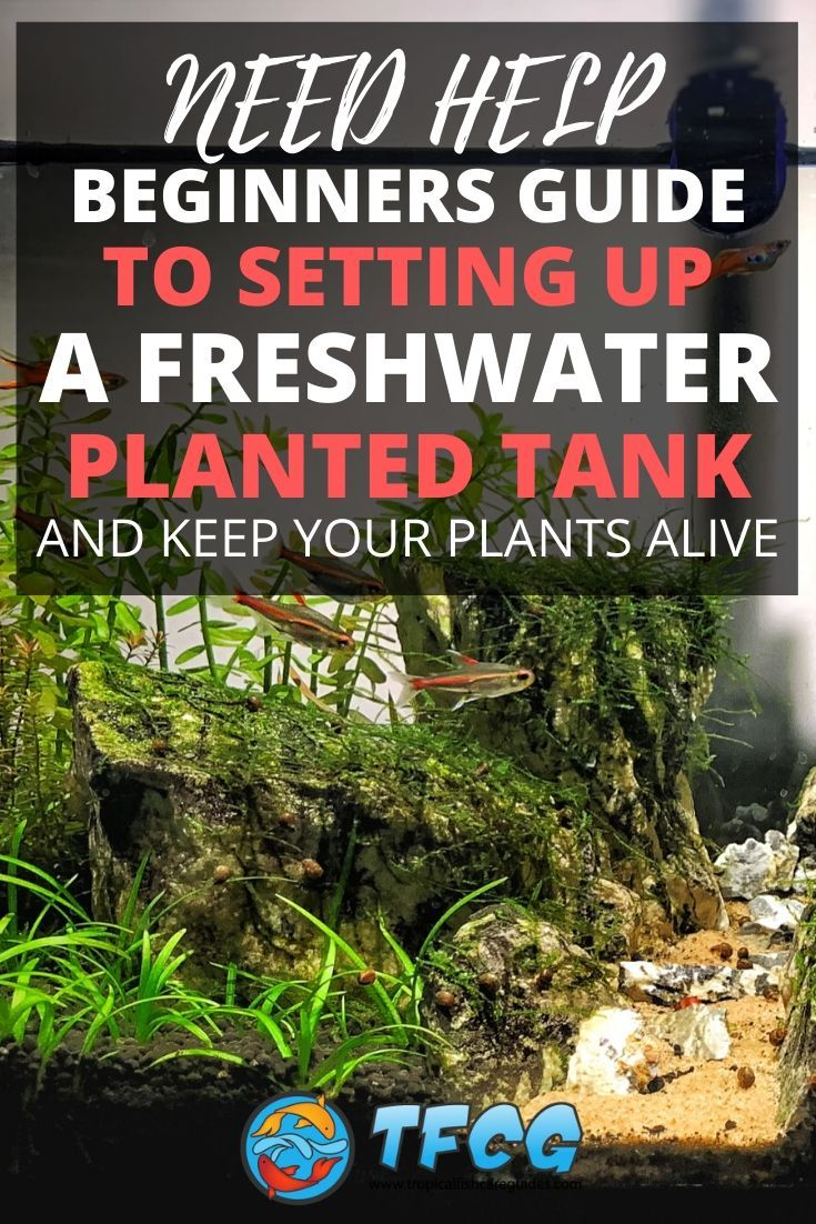 How To Keep Aquarium Plants Alive For Beginners [Care Guide]