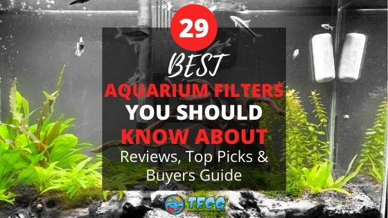 The Best Fish Tank Filter - You Should Know About – Reviews (Top Picks) & Guide