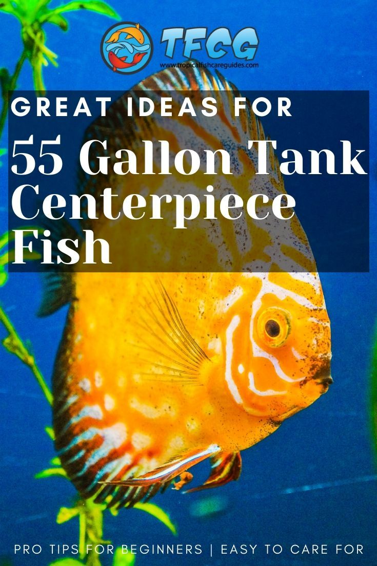 Amazing Ideas For Centerpiece Fish For A 55 Gallon Tank