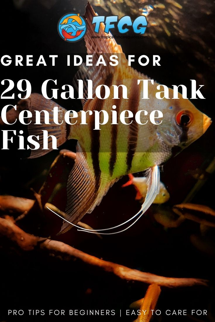 Beautiful Ideas For Centerpiece Fish For A 29 Gallon Tank
