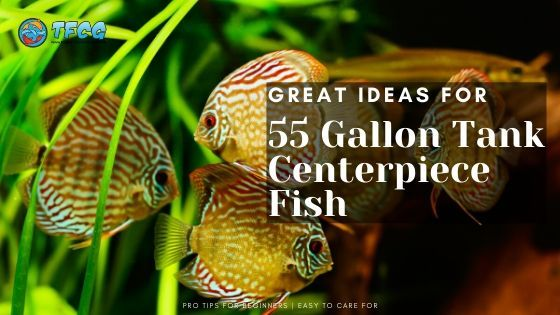 Centerpiece Fish For 55 Gallon Tank - Big Fish For A Big Tank