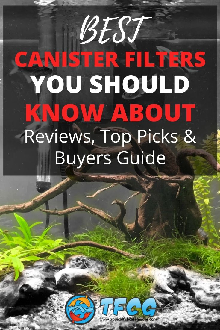 Find The Best Canister Filter For Your Money [Reviews & Guide]