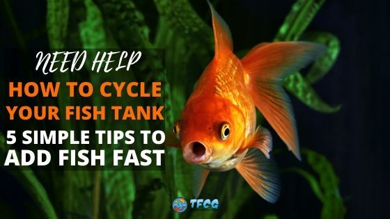 5 Simple Fundamentals Of The Fish Tank Nitrogen Cycle