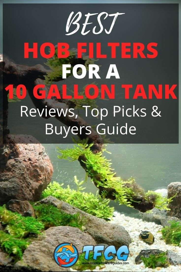 Best HOB Filter For A 10 Gallon Tank