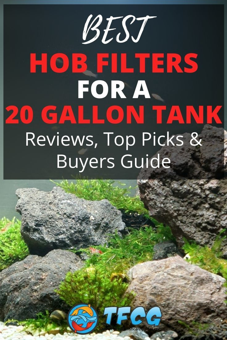 Best HOB Filter For A 20 Gallon Tank