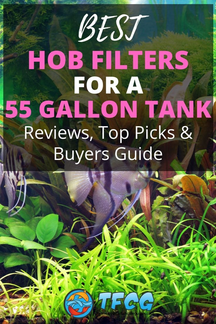 Best HOB Filter For A 55 Gallon Tank