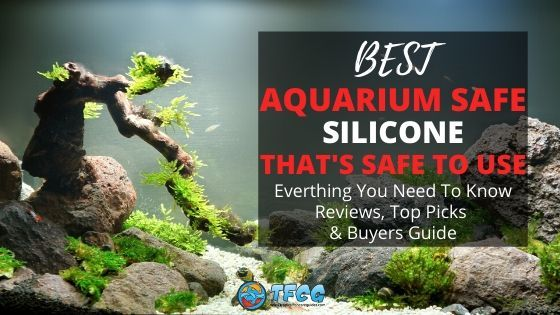 Everything You Need to Know About Aquarium Safe Silicone