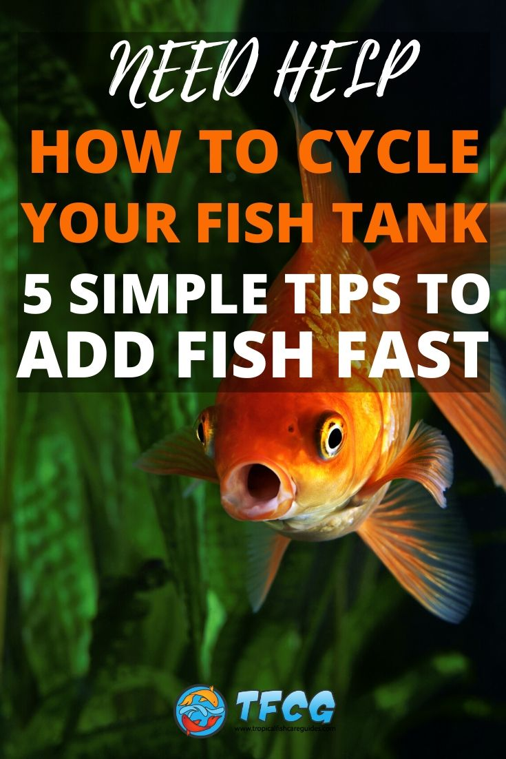 Fish Tank Nitrogen Cycle Simple Fundamentals (Tips To Add Fish Fast)