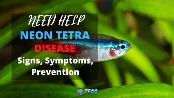 Neon Tetra Disease Causes, Signs, Symptoms, Prevention and Treatment