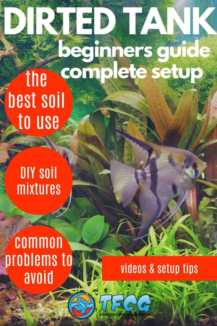 Dirted Tank Setup - Beginners Guide On How To Set Up Your First Dirted Planted Tank
