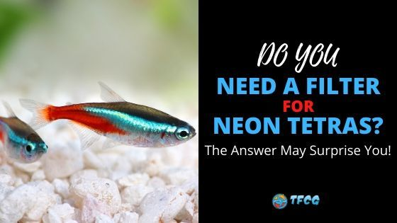 Do Neon Tetras Need A Filter