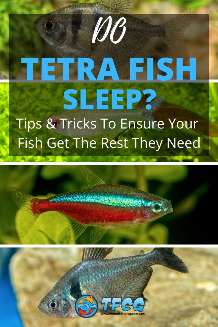 Do Tetra Fish Sleep Tips & Tricks To Ensure Your Fish Get The Rest They Need