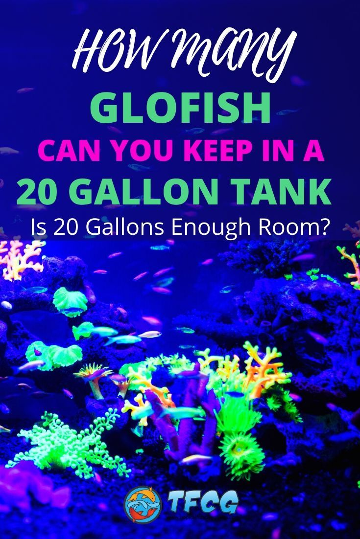 How Many GloFish In A 20 Gallon Tank Is 20 Gallons Enough Room_